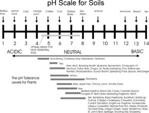 pH for trees and bushes